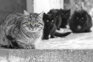 Group og cats with green eyes