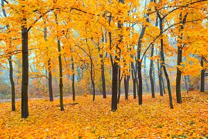 Beautiful autumn forest in the park