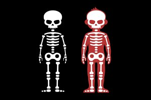 Skeletons Human Bones Set