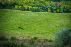 Two horses on green meadow