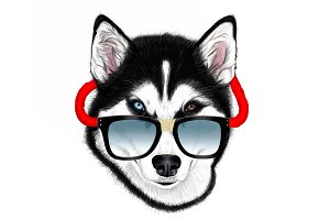 Husky with glasses