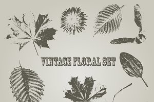 Vector Vintage Style Floral Elements