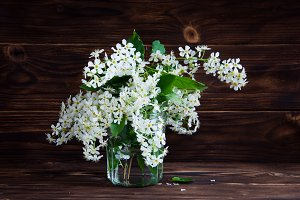 Bunch of flowers bird cherry
