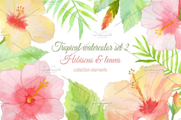 Tropical watercolor set 2. Hibiscus. - Illustrations
