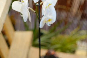 orchid at home