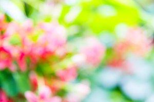 Blurred flower background