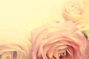 sweet color roses in vintage style