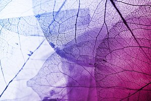 colorful dried leaf texture
