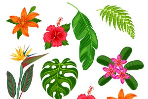 Set of stylized tropical plants.