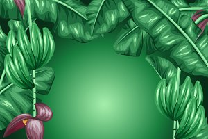 Backgrounds with banana leaves.
