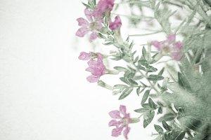 weed flowers in vintage color