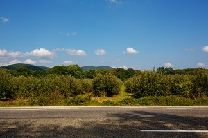 Landscape road, trees, mountains