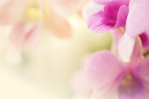 Sweet color orchids in soft color