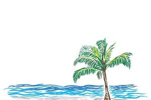 Paradise Palm, sketch