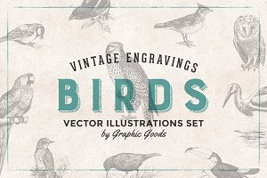 Birds Engravings Set