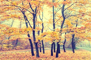 Beautiful autumn forest