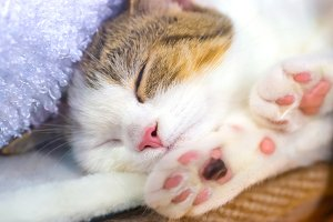 Cute little kitten with pink paws