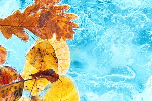 Fallen autumn leaves in ice