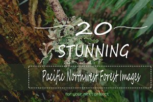 20 Pacific Northwest Forest Images