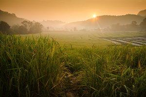 Sunrise at terraced rice field