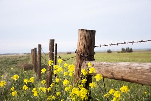 Country Fence with Flowers