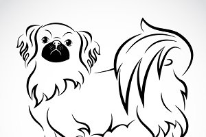 Vector image of an Dog (Pekingese)