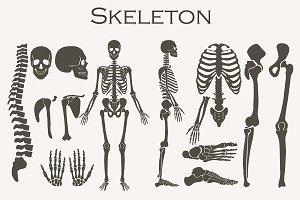 Human bones skeleton silhouette set.