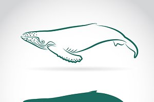 Vector image of whale