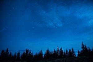 Forest of pine trees under blue dark