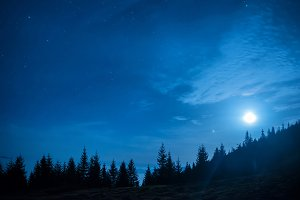 Forest of pine trees under moon