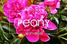 10 peony images - photo pack