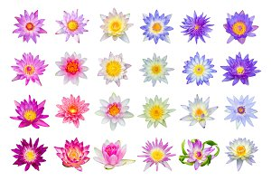Lotus flower set isolated