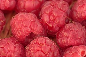 Macro of ripe raspberries