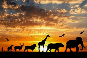 Animals on golden cloudy sunset