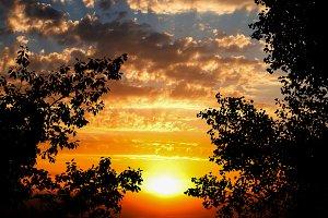 Trees on golden sunset
