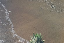 Pineapple and Beach Vibes 13