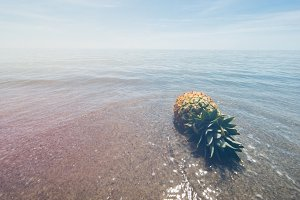 Pineapple and Beach Vibes 20