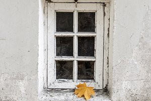 Window and lonely maple leaf