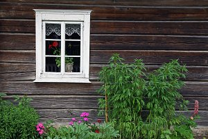 Rural house and flowerbed