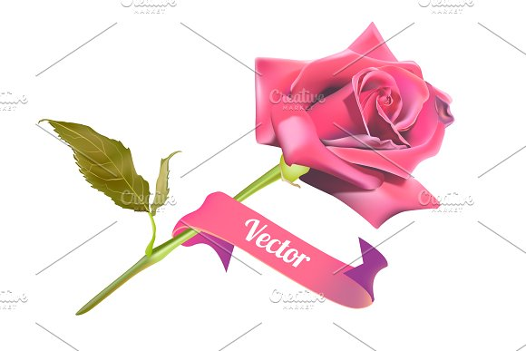 Realistic pink rose
