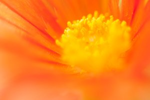 Orange flower Essence #3