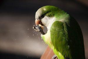 Green Parrot #3