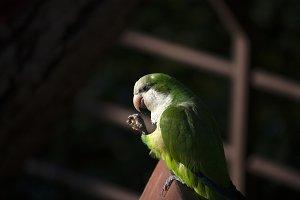 Green Parrot #6