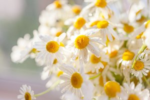 Camomile bouquet.