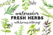 Watercolor Fresh Herbs Clipart Set