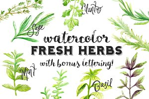 Watercolor Fresh Herbs Clipart Set