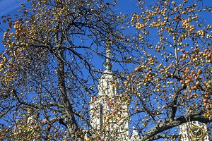 Ripe apples and Moscow University