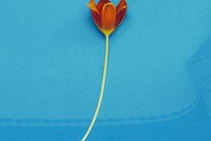 Red Tulip Minimal art