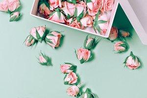 Pink Roses Art