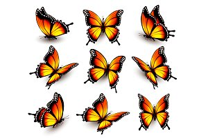 Beautiful Orange Butterflies